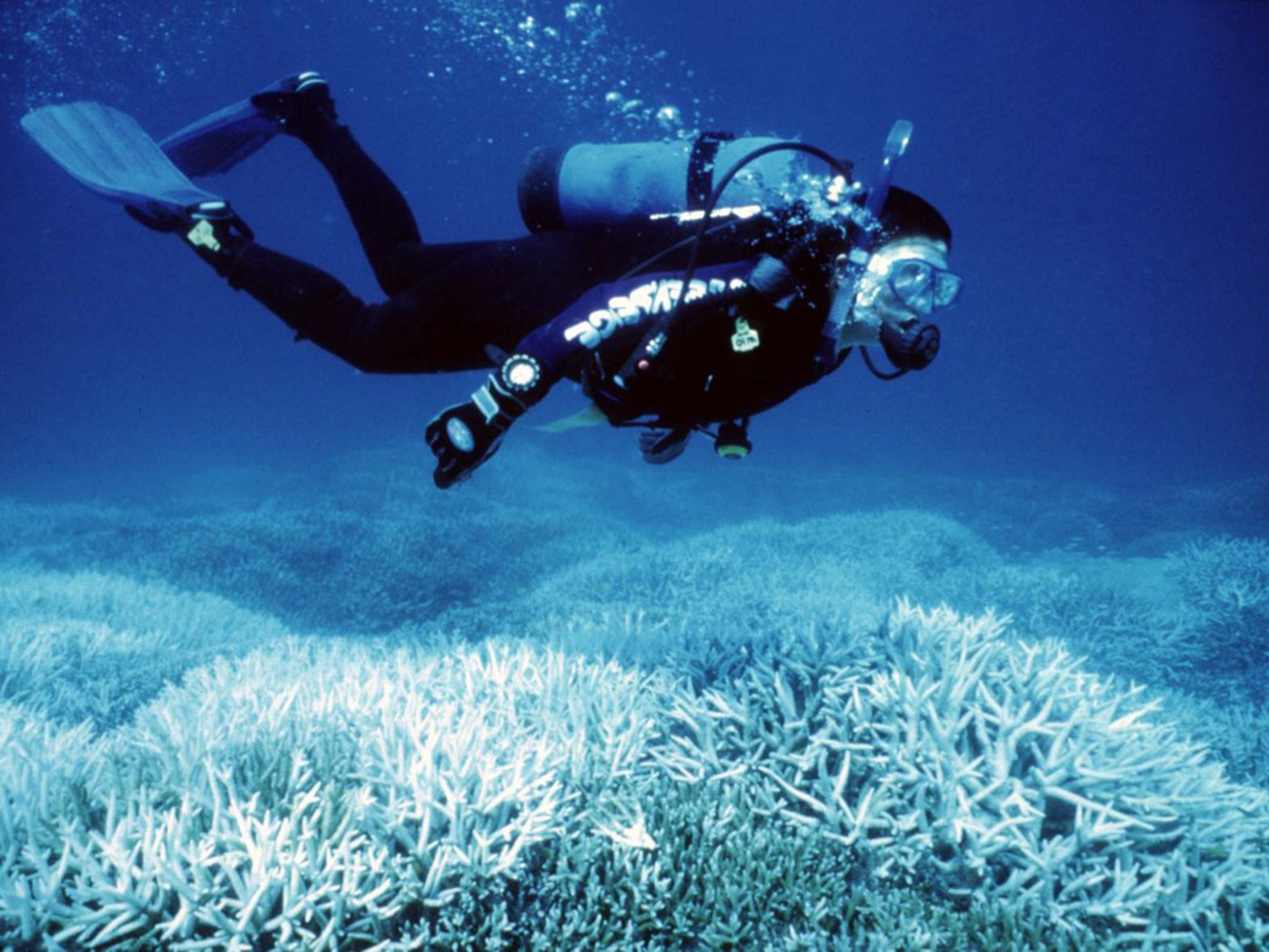 great barrier reef declared dead u0027after a long illness u0027 in
