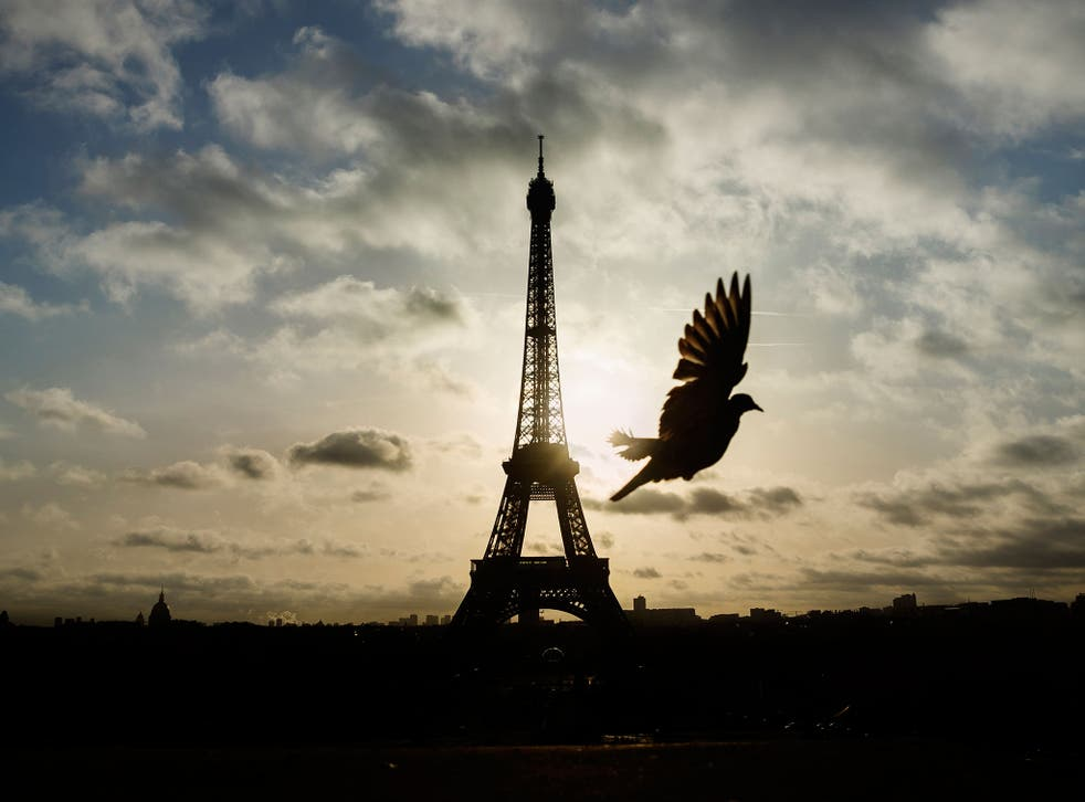 A bird flies in front of the Eiffel Tower ,which remained closed on the first of three days of national mourning in Paris