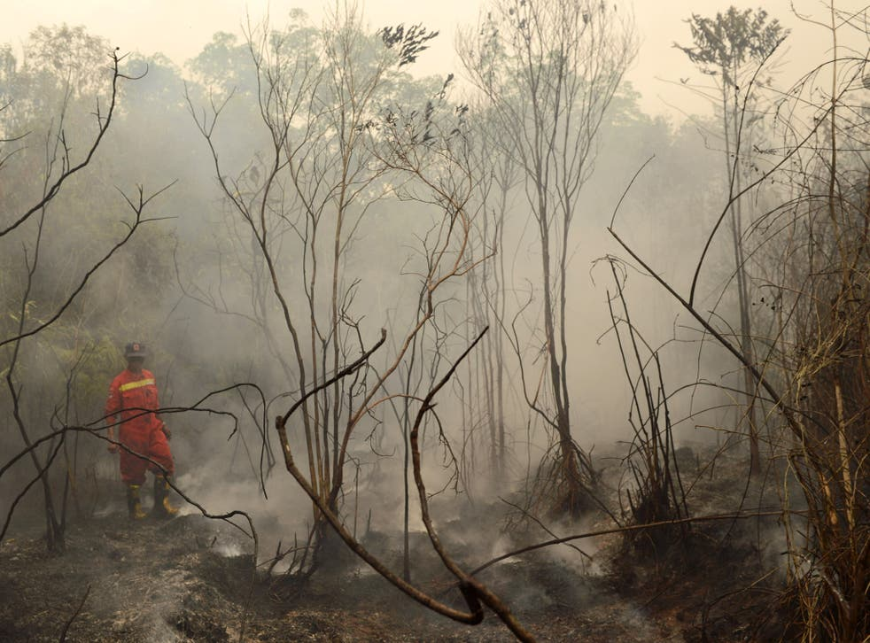 This year's forest fires in Indonesia were attributed to a record El Niño
