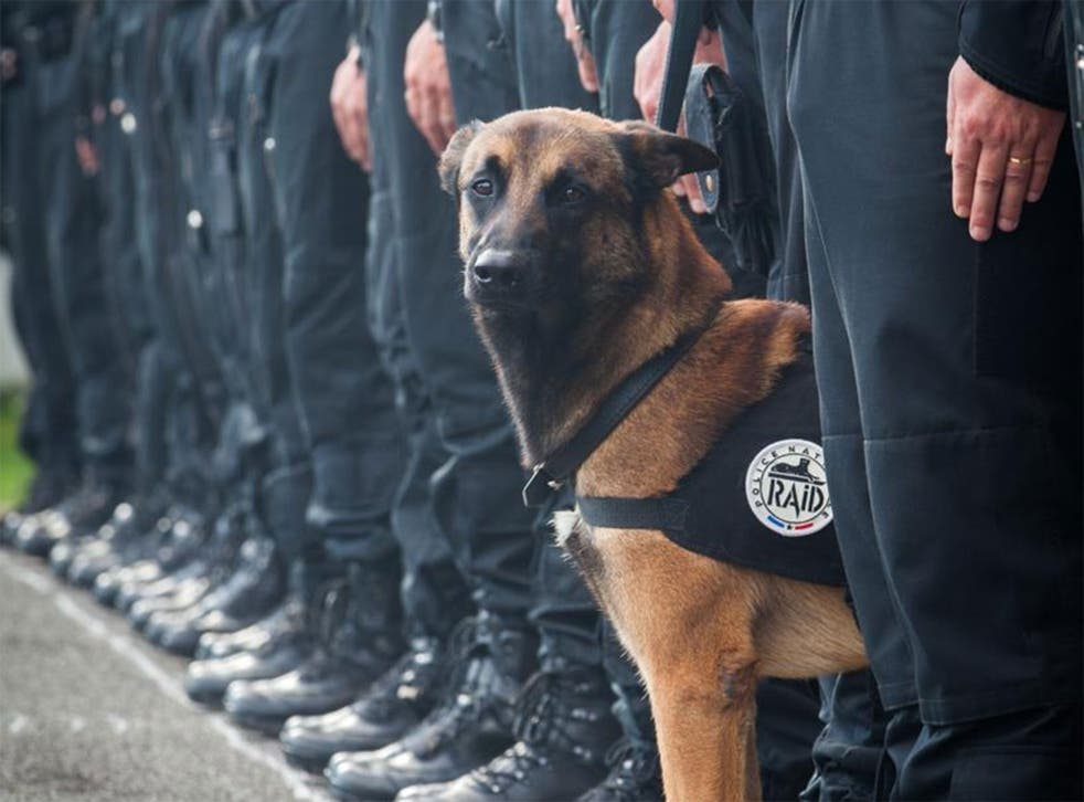 Police named the dog killed in Wednesday's raid as Diesel