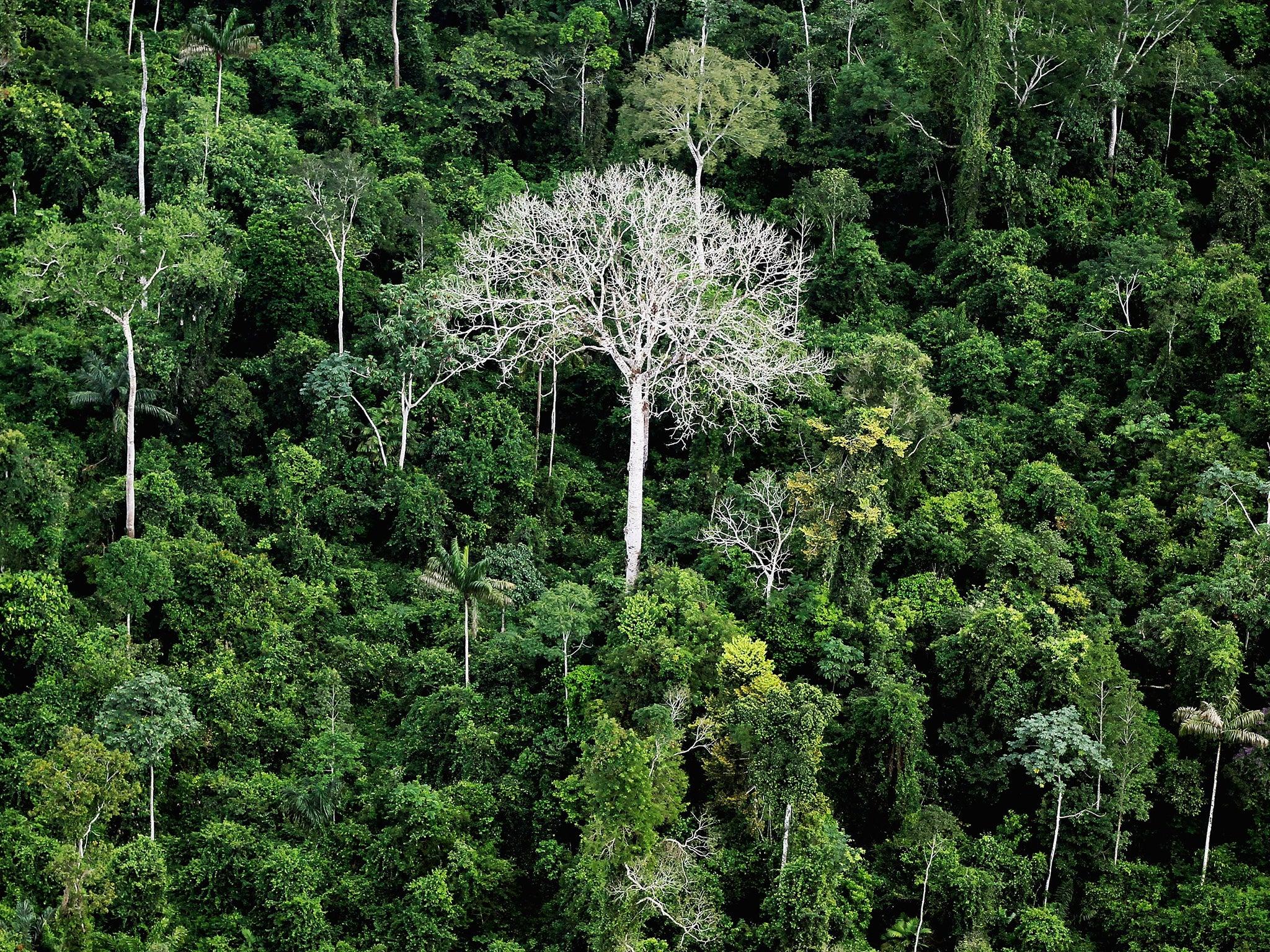 Lembaga Pemerintah Brasil: Deforestasi Amazon Kian Parah di Bawah Kepemimpinan Bolsonaro