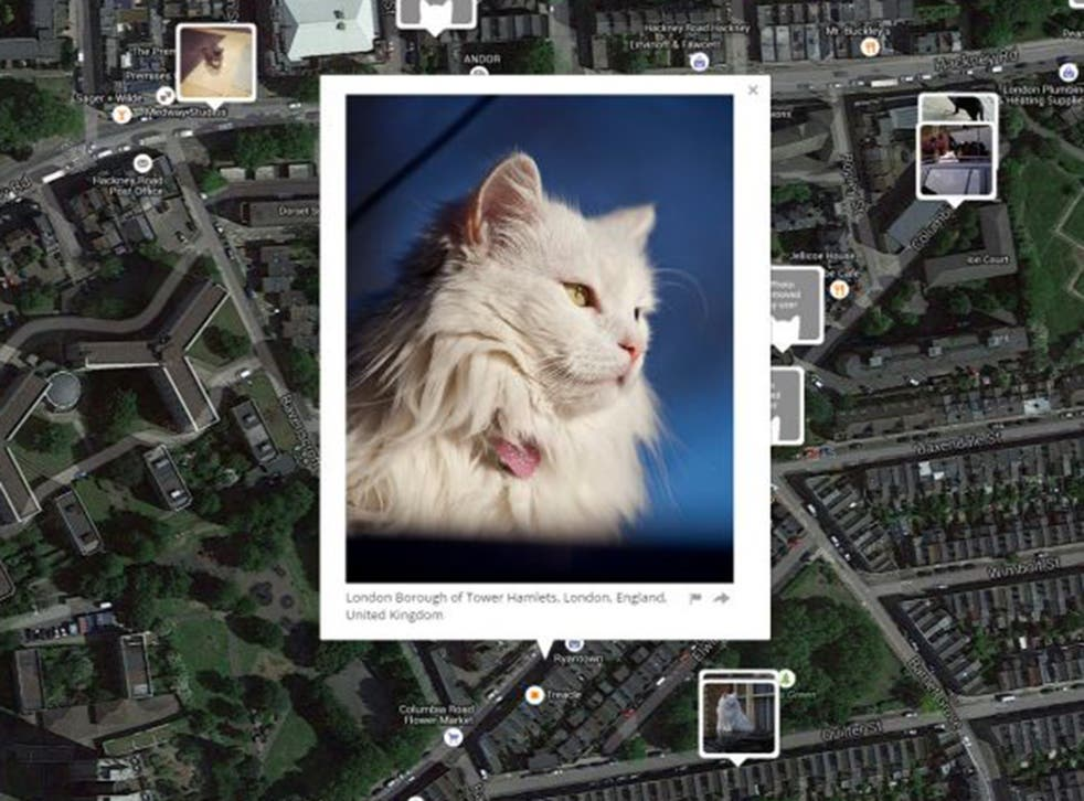 'IKnow Where Your Cat Lives' maps pictures of cats posted on social media by their owners