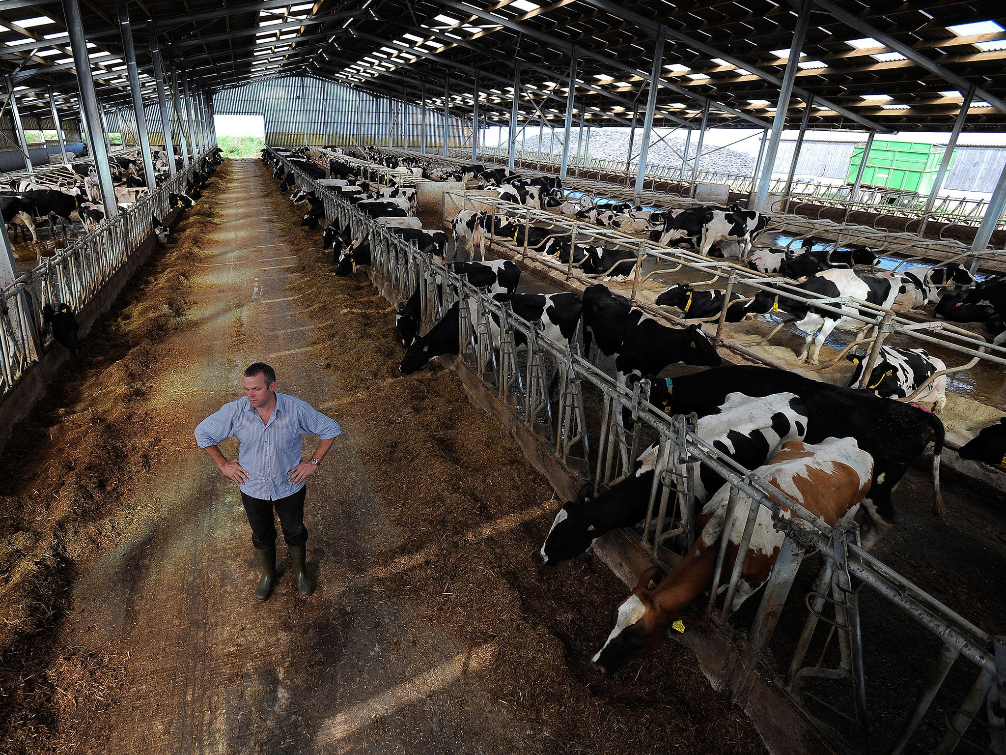 Plummeting milk price prompts 'stealth' rise of 2,000-cow ...