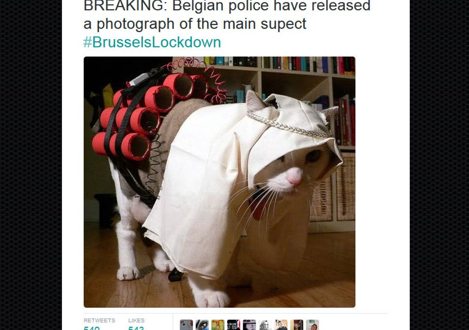 Brussels Lockdown: Belgians tweet pictures of cats to confuse Isis