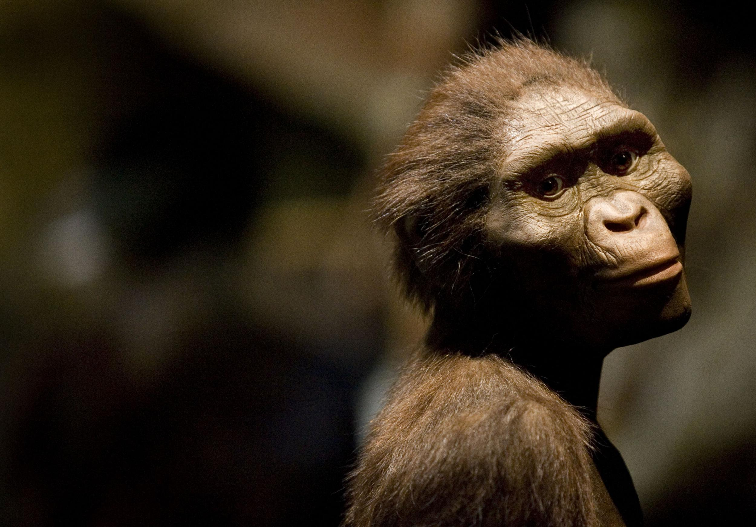 An Important Discovery Related To >> Who Discovered Lucy The Australopithecus And Why Was The