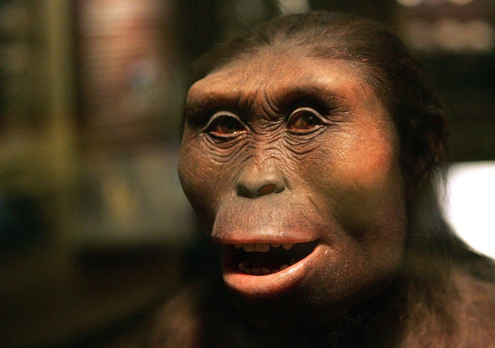 who is lucy the australopithecus how related are you to the 3 2