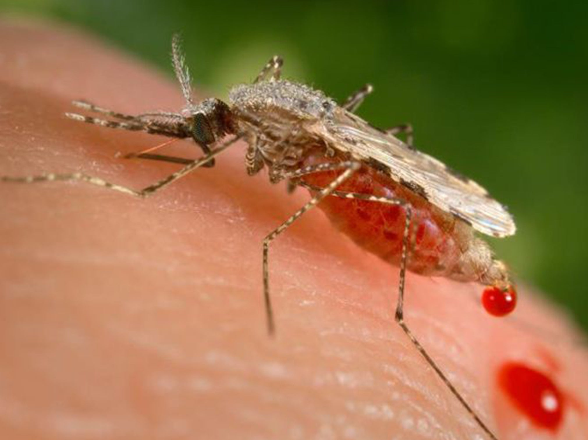 Toothpaste ingredient may help curb drug-resistant malaria, finds AI-powered robot