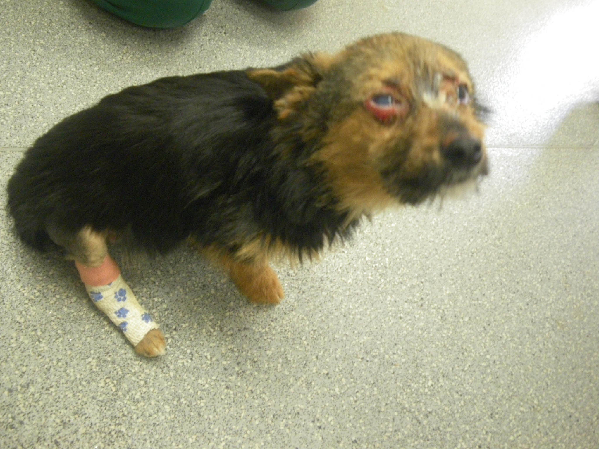 Dog Head Fire Animal Rescue