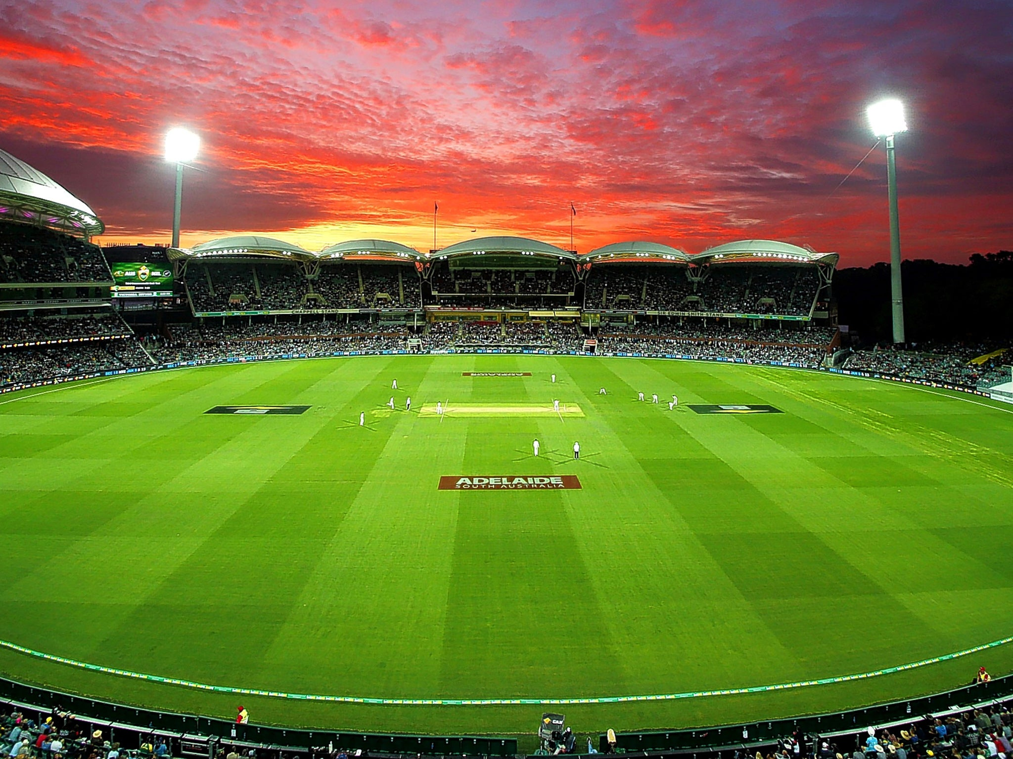 Australia Vs New Zealand: Adelaide Tickled Pink As Day