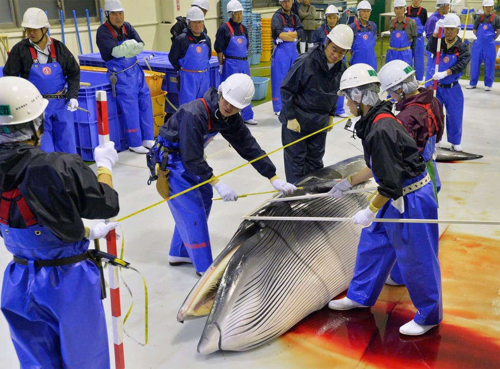 Researchers check a minke whale at Ayukawa port in Ishinomaki