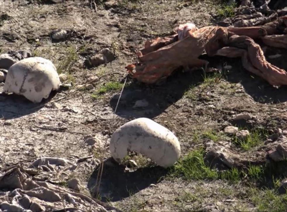 Skulls remain at the site of a purported mass grave in the city of Sinjar, northern Iraq after it was retaken from Islamic State militants