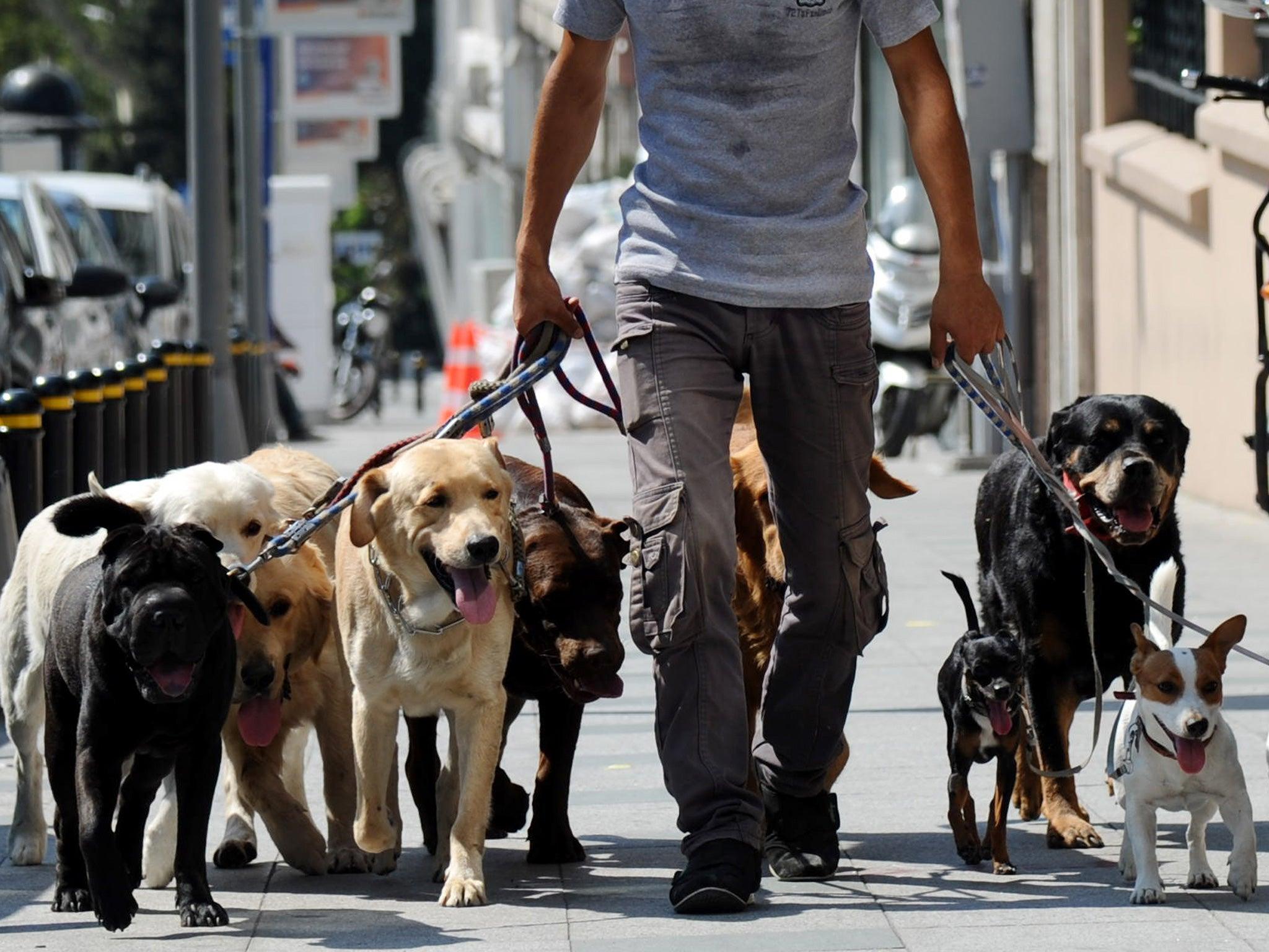 UK suffering 'absolutely disgusting' dog poo plague amid coronavirus pandemic