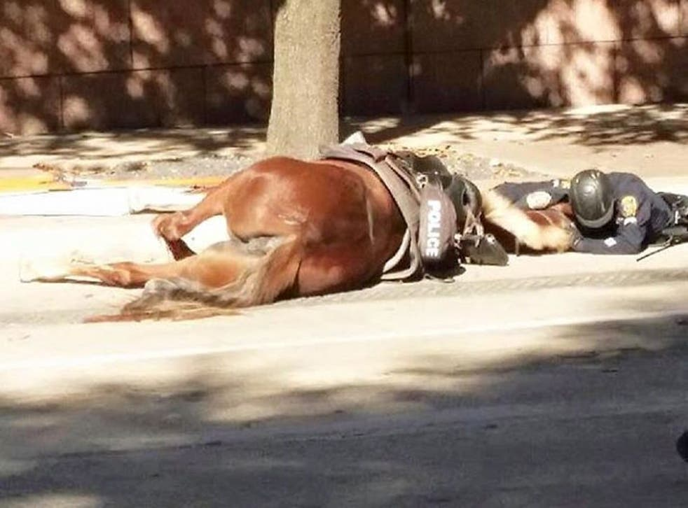 An officer comforts her dying patrol horse.