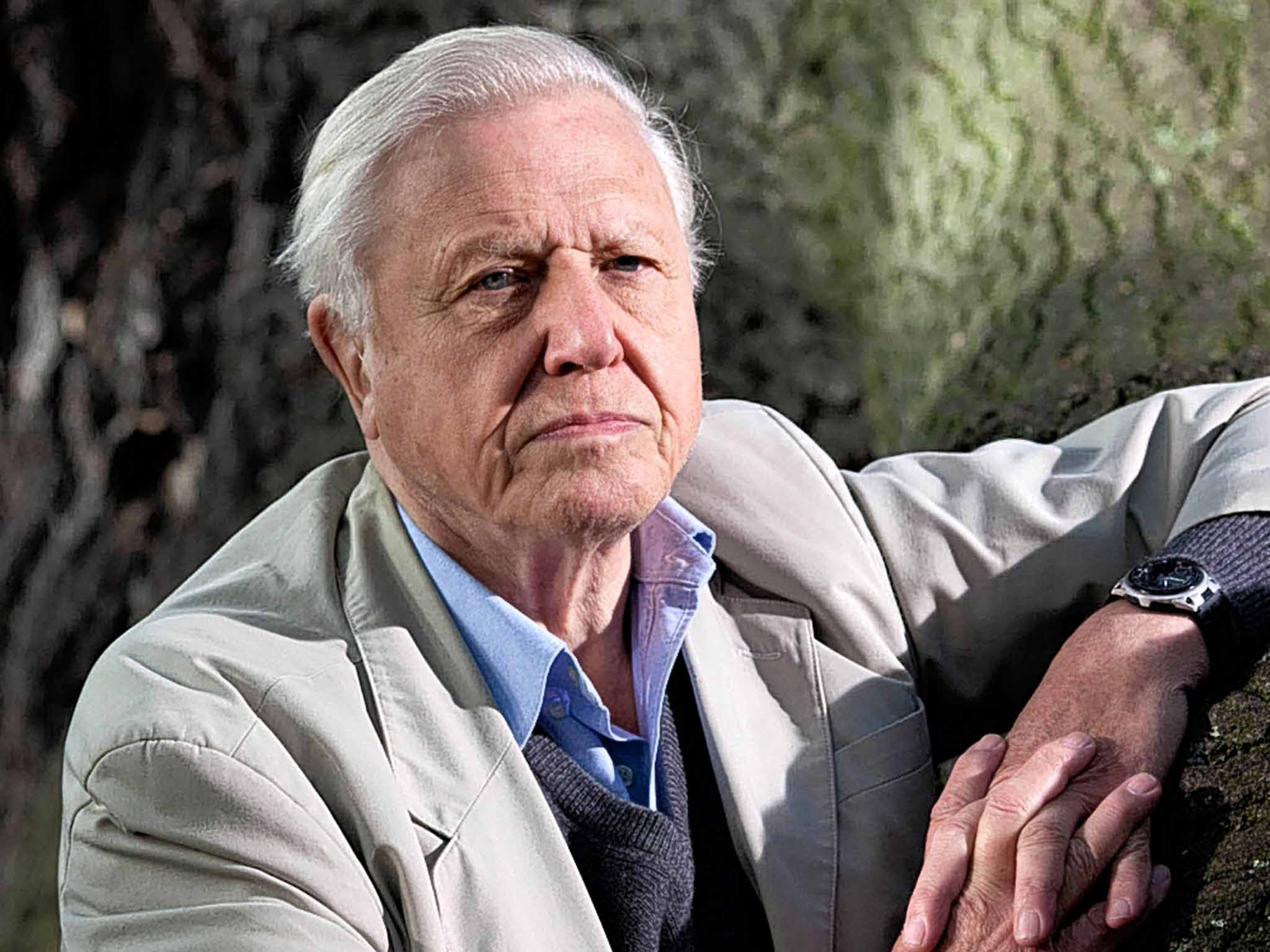 How Sir David Attenborough 39 S Voice Has Inspired A New