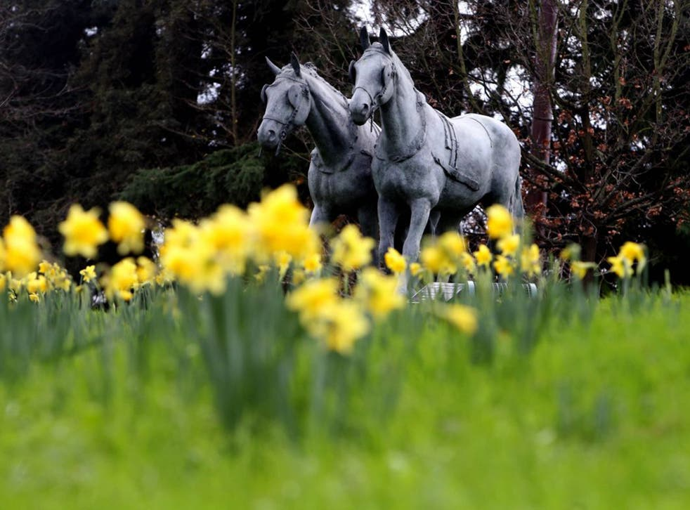 Daffodils in bloom in Windsor, Berkshire, as the UK could be set for the warmest December in almost 70 years
