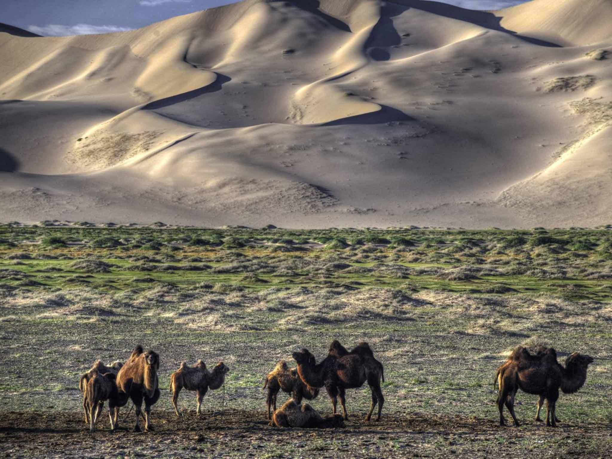 El ambiente en youtube. - Página 6 Mongolila-camels-rex