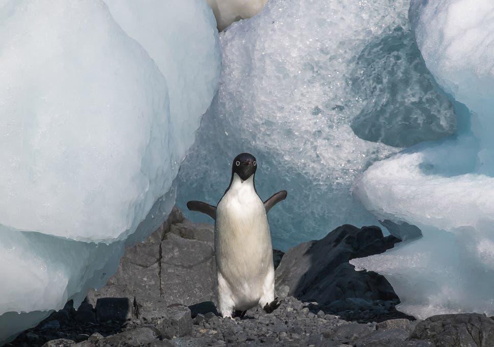 Iceberg Is Melting Ebook