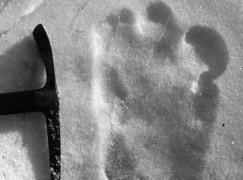 A reported footprint of the Abominable Snowman, taken near Mount Everest in 1951
