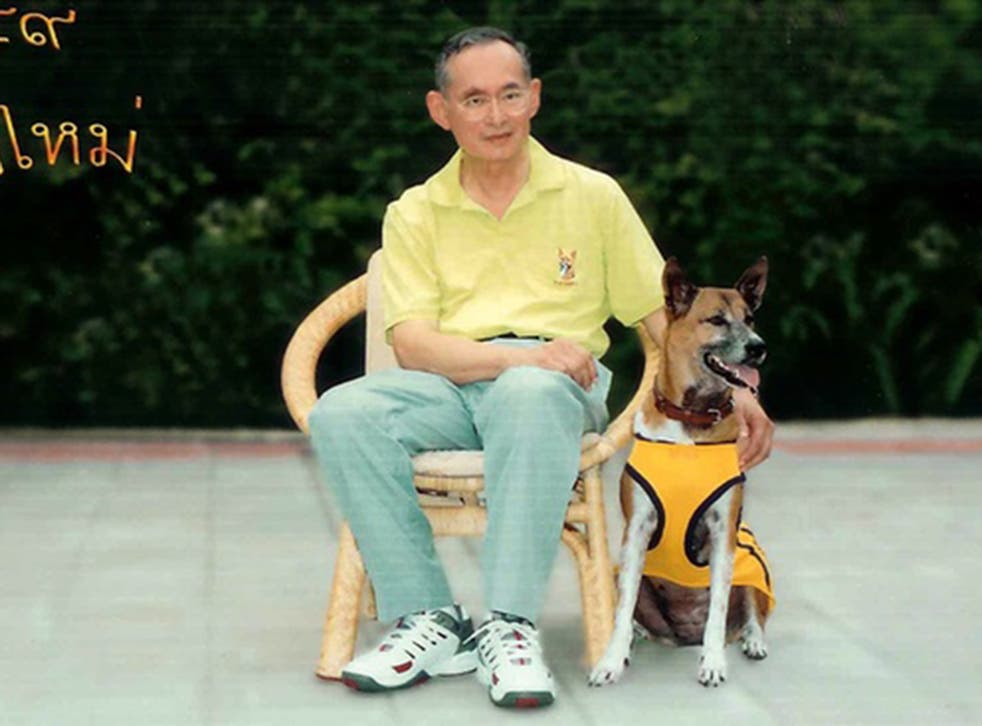 Tongdaeng the dog  became a household name in Thailand after King Bhumiboil Adulyadei penned a heartfelt book about her in 2002