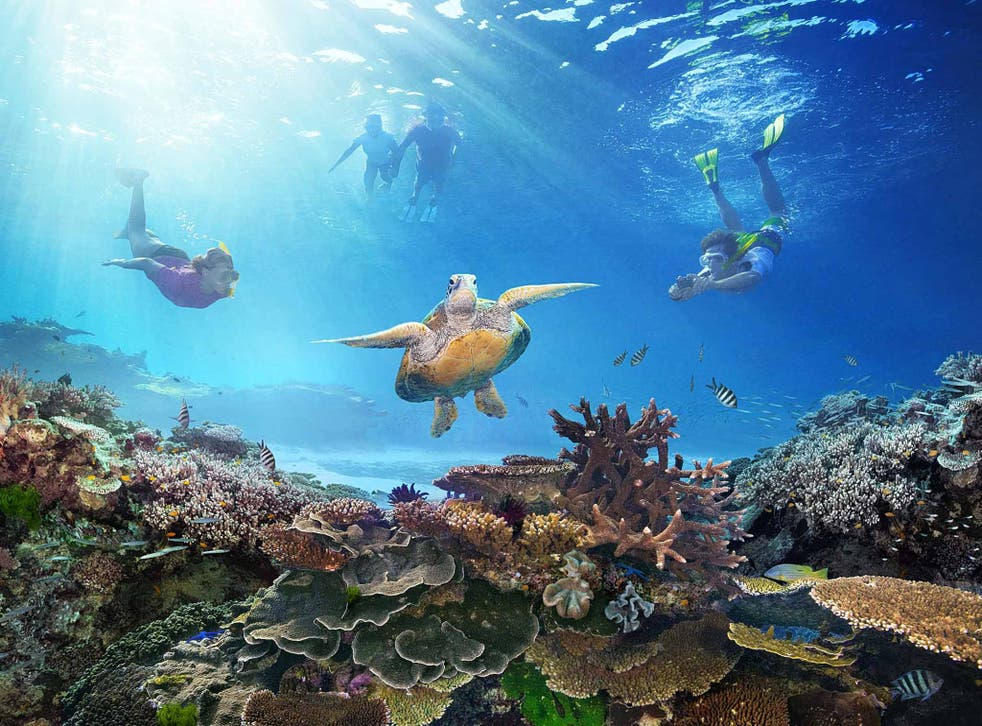 Come out of your shell: snorkelling on the Reef