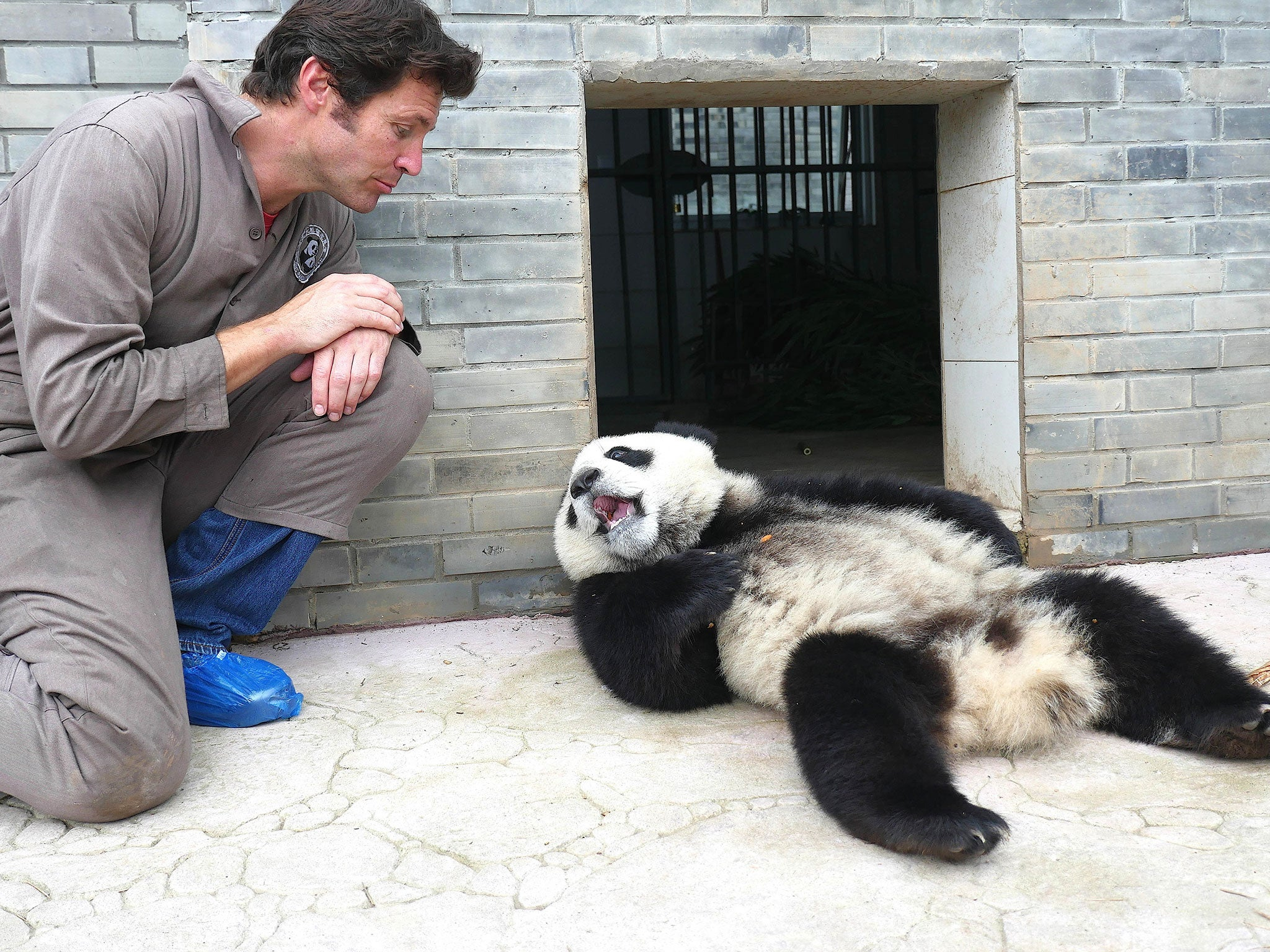 Festival Travel pandas in Moscow: days of culture Chengdu 18