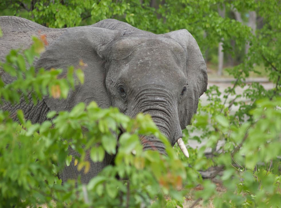 Botswana needs international help to continue its vital work protecting elephants in the wild from poachers