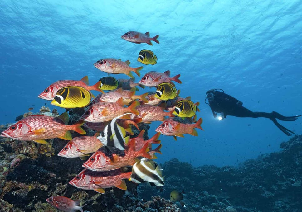 Great Barrier Reef Half Of Natural Wonder Is Dead Or Dying