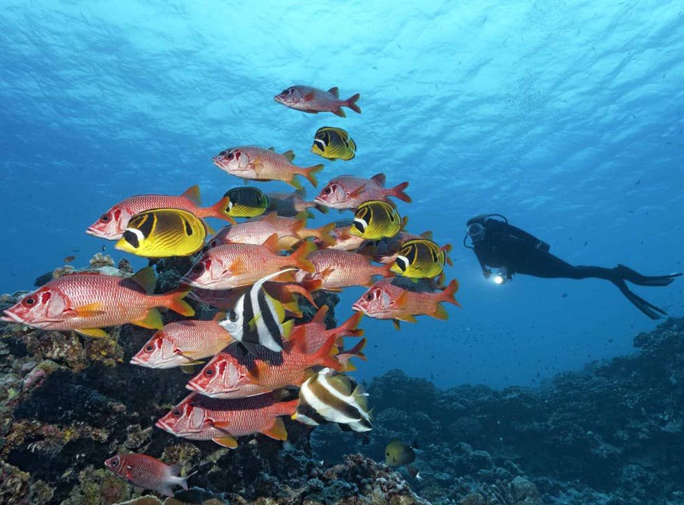 A school of fish pass a scuba diver on the Barrier Reef