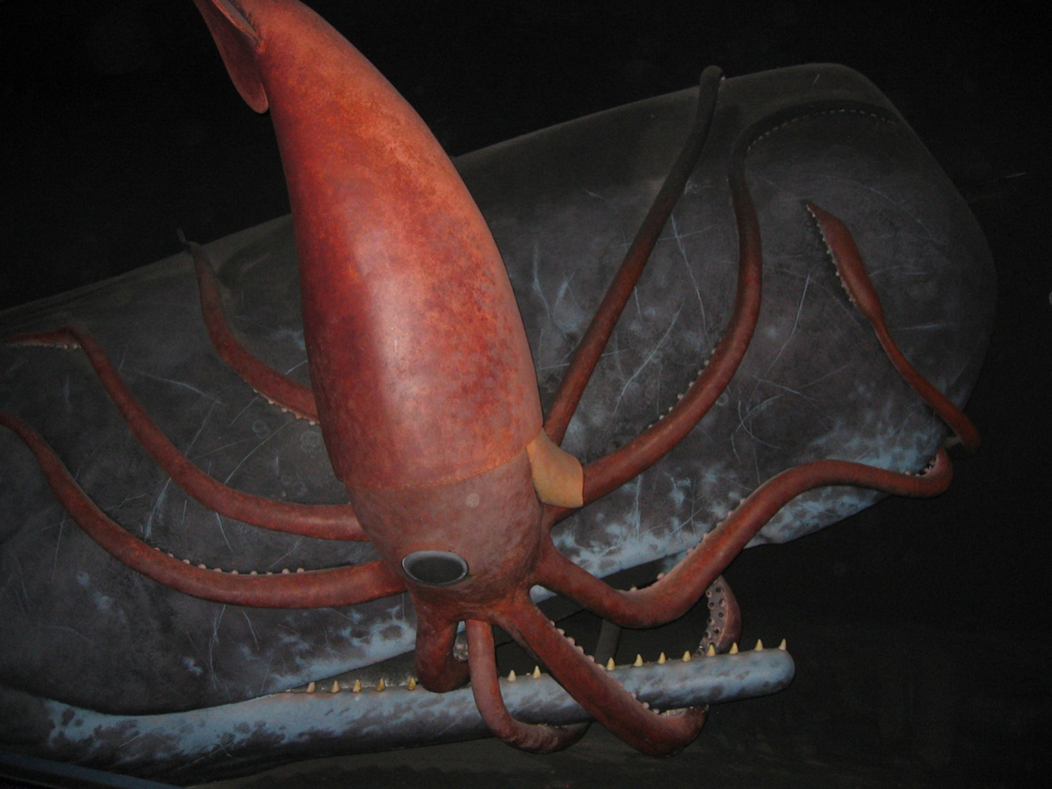 Kraken The Real Life Origins Of Legendary Sea Monster