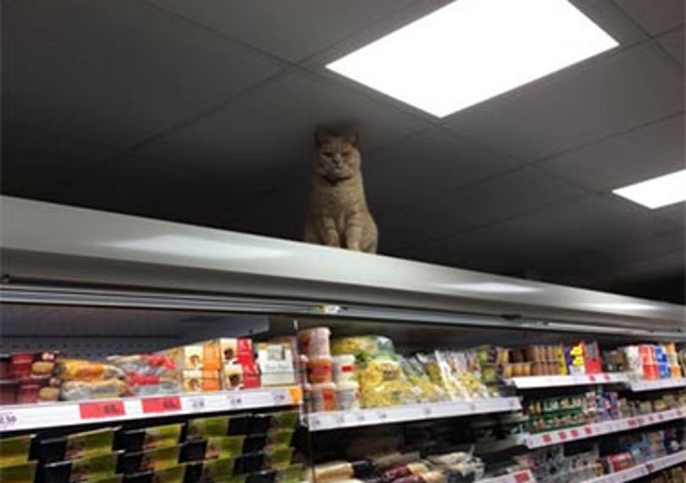 The Sainsburys Cat In Brockley Has Returned To The Shelves The