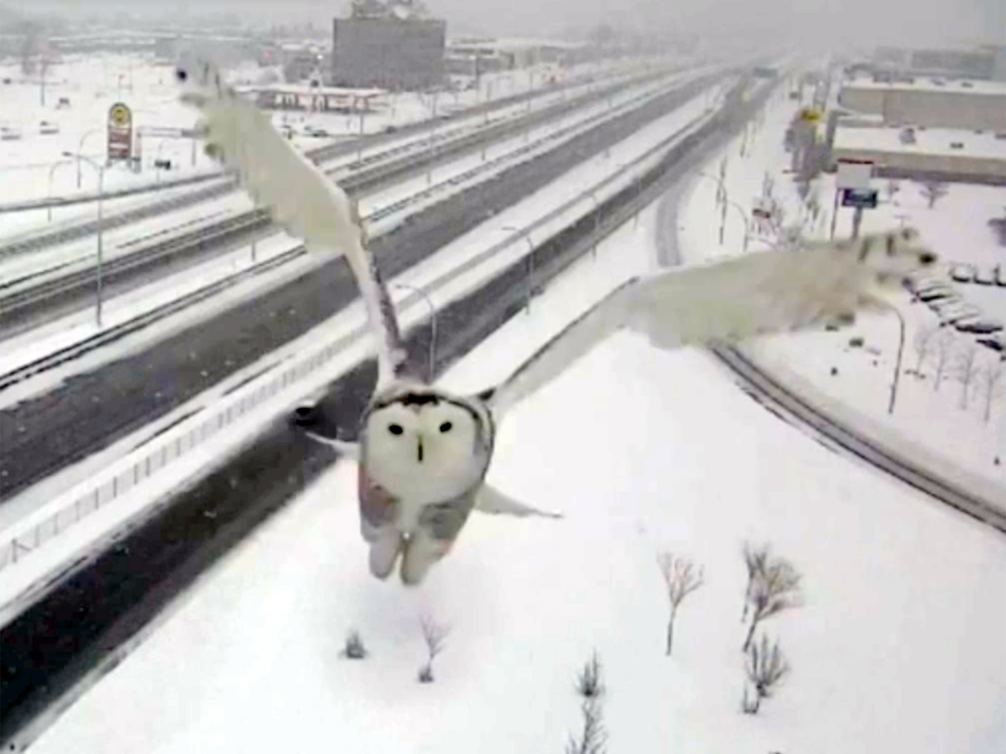 Stunning images of snowy owl caught by Montreal traffic camera | The