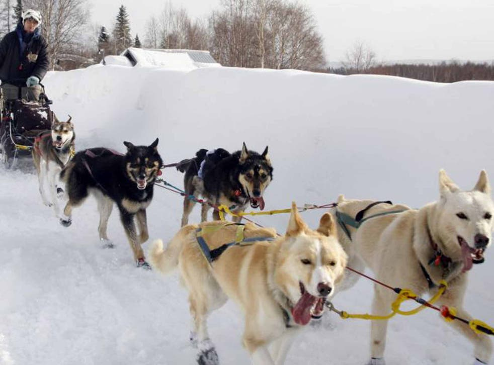 Dog gone: husky sledging in Alaska
