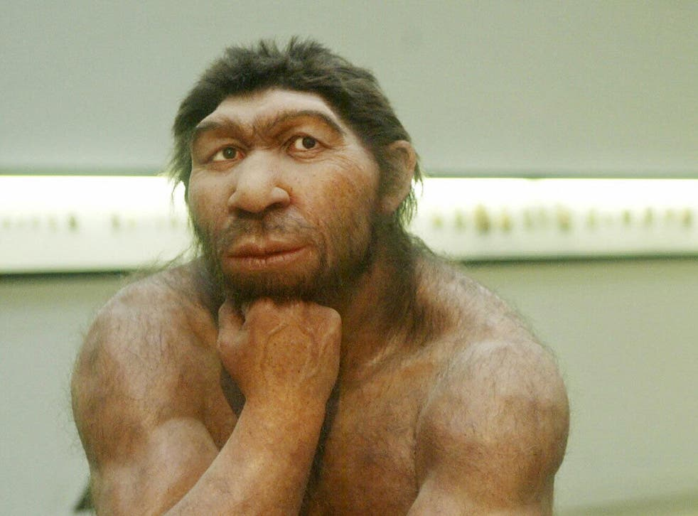 A reconstruction of a Neanderthal man at the Prehistoric Museum in Halle, eastern Germany