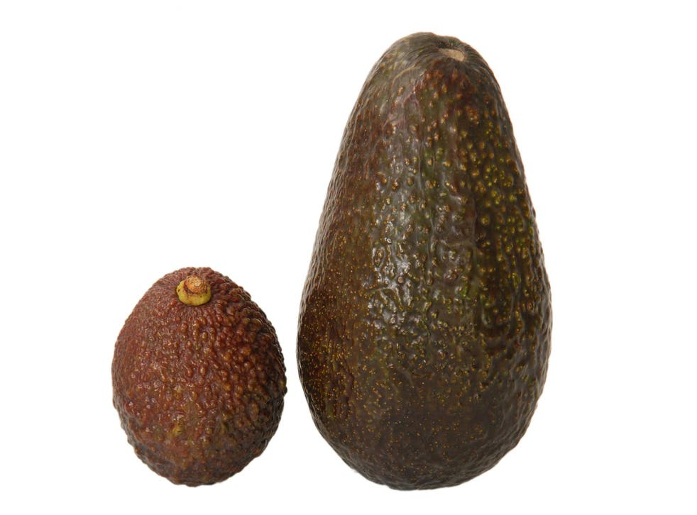 The mini avocado (R) will relieve the burden of eating only half an avocado
