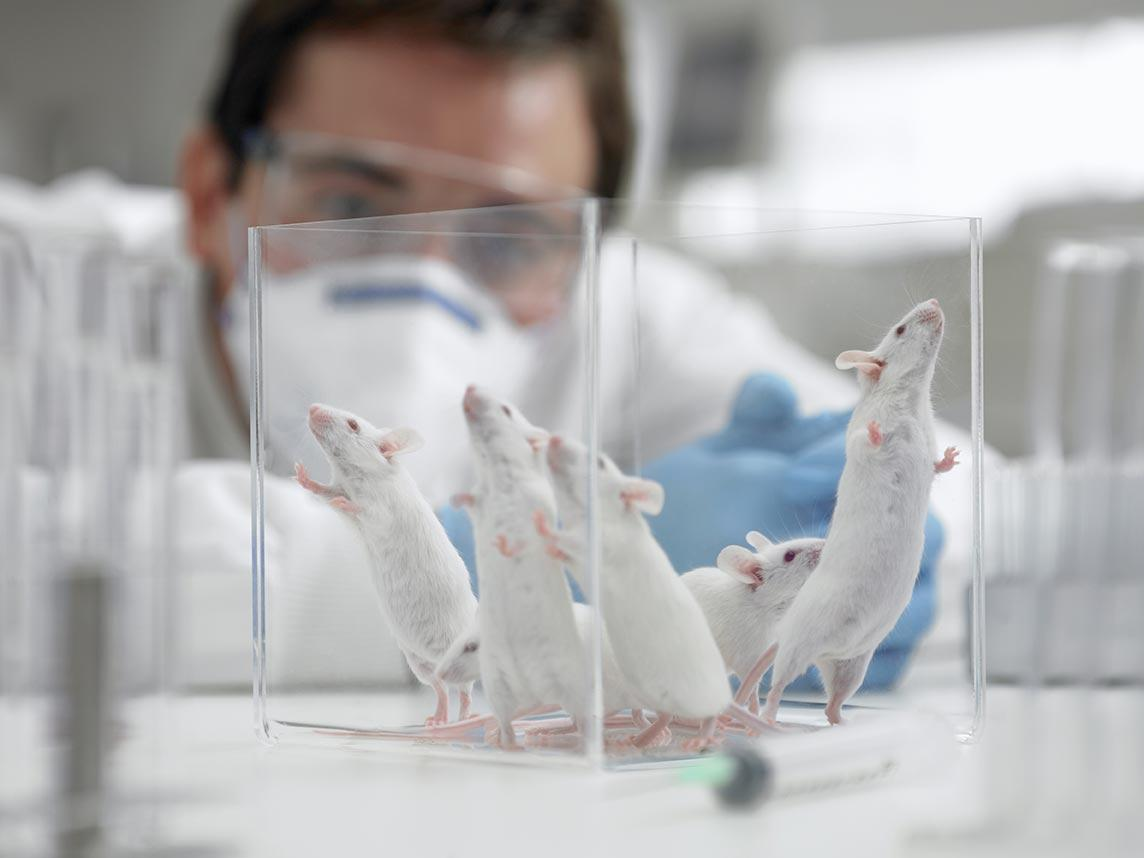 Scientists discover elixir of youth – for mice – and begin tests on humans