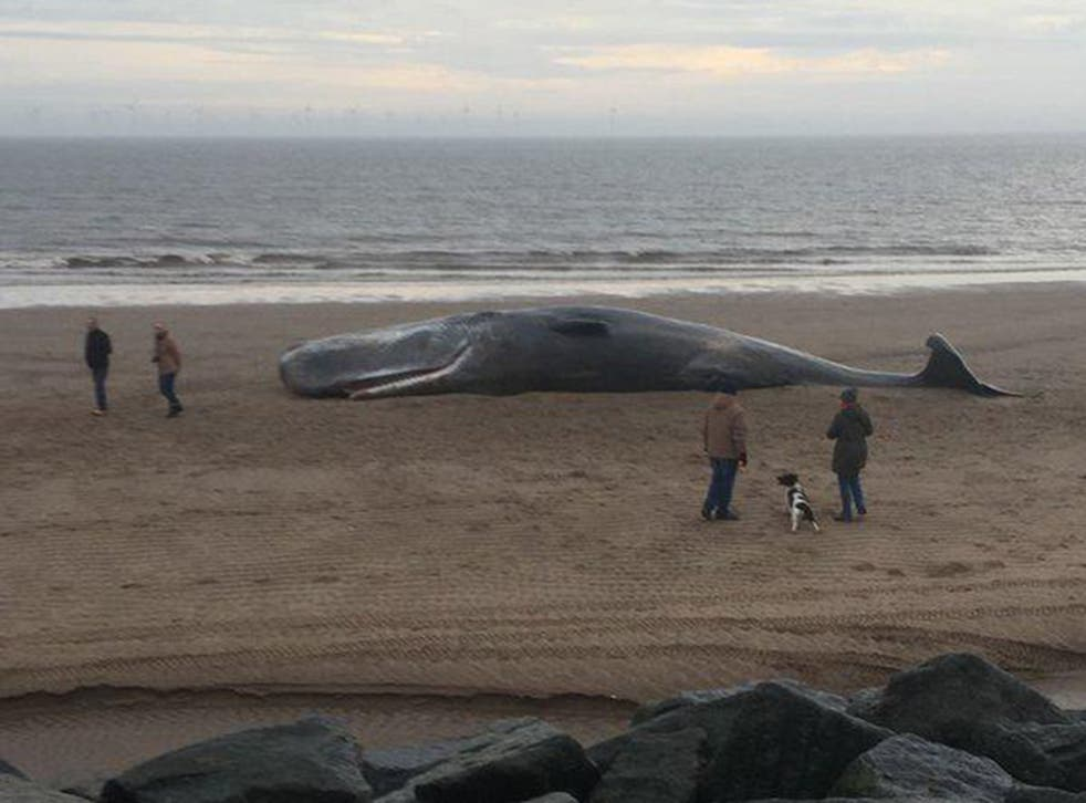 One of the three whales which washed up on a Skegness beach 'exploded'