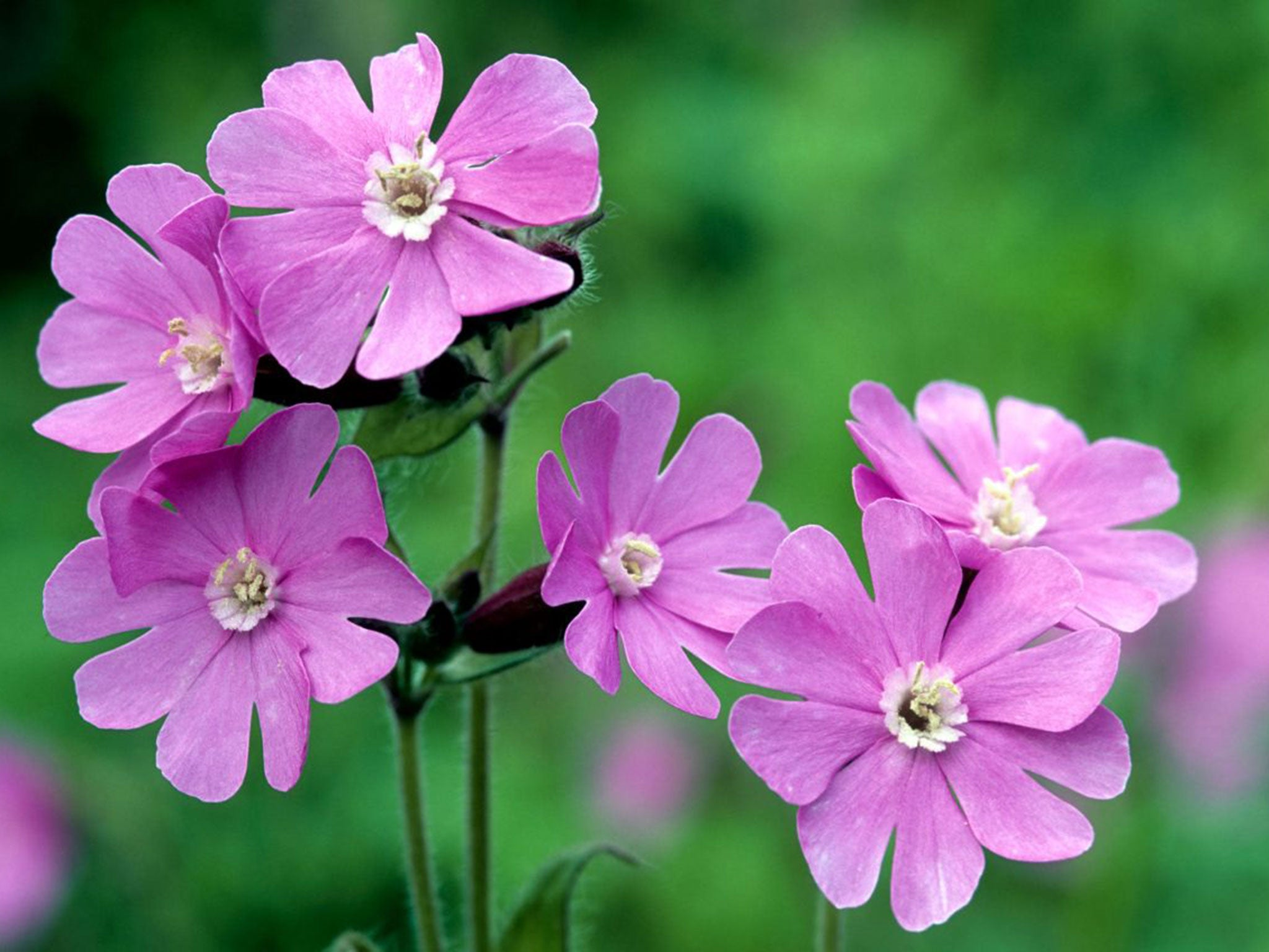 More than 600 species of british flowers in bloom on new years day red izmirmasajfo