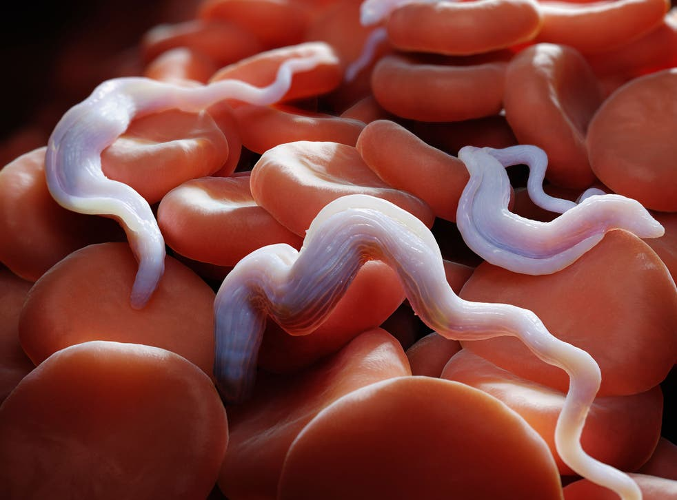 Trypanosoma brucei parasites, which cause the sleeping sickness disease