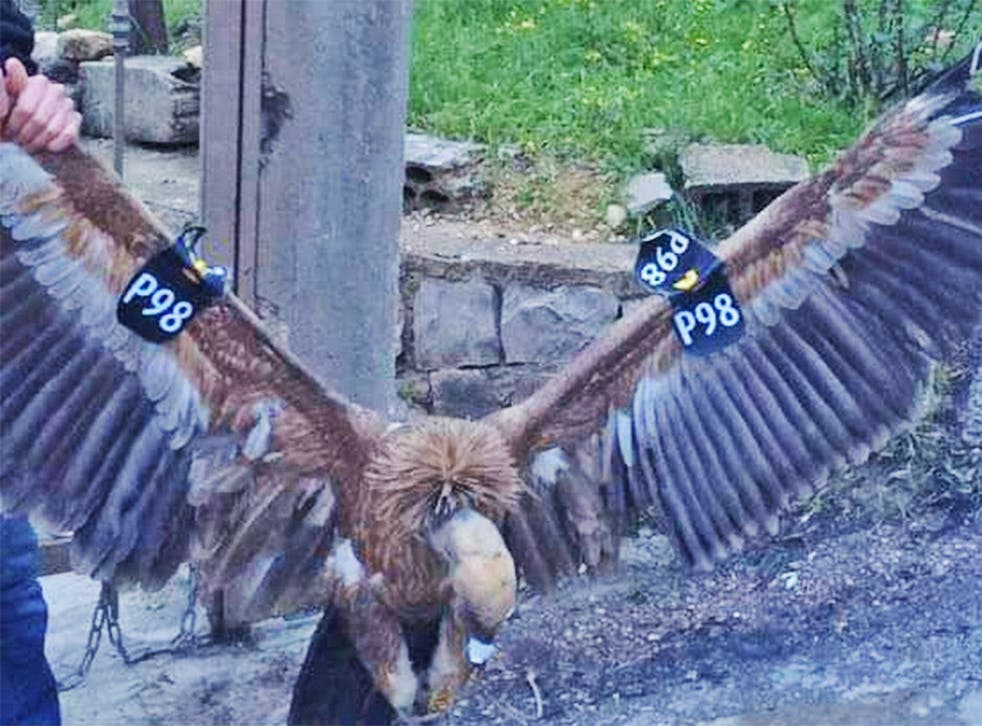 The bird was reportedly freed after locals determined it was not a threat