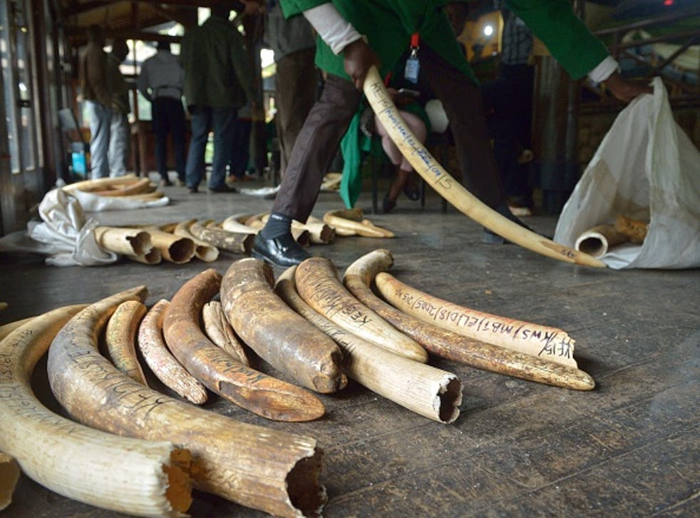Staff members of the Kenya Wildlife Services (KWS) do the inventory of illegal elephant ivory stockpiles at the KWS headquarters in Nairobi.