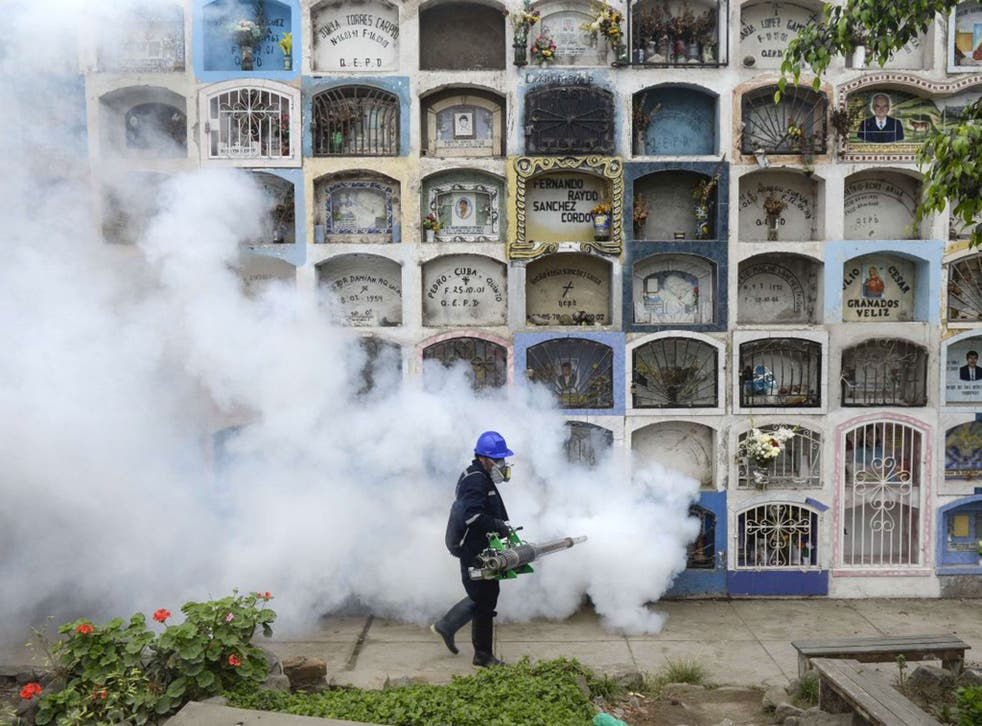 Fumigating a graveyard: 'Aedes aegypti' can replicate in flower vases and other tiny sources of water and are hard to eradicate