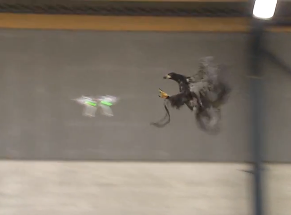 Dutch police have already trained eagles to take down drones