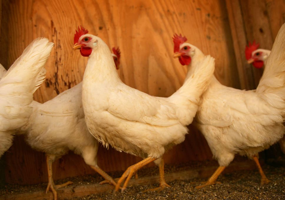 Chicken Accounts For Half The Meat Eaten In The Uk But Heres Why