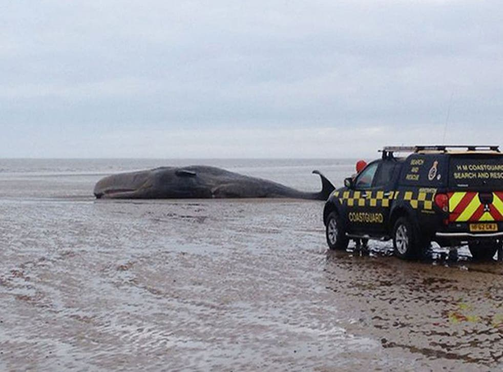 The whale was alive when it became stranded on the beach in Hunstanton, Norfolk, on 4 February