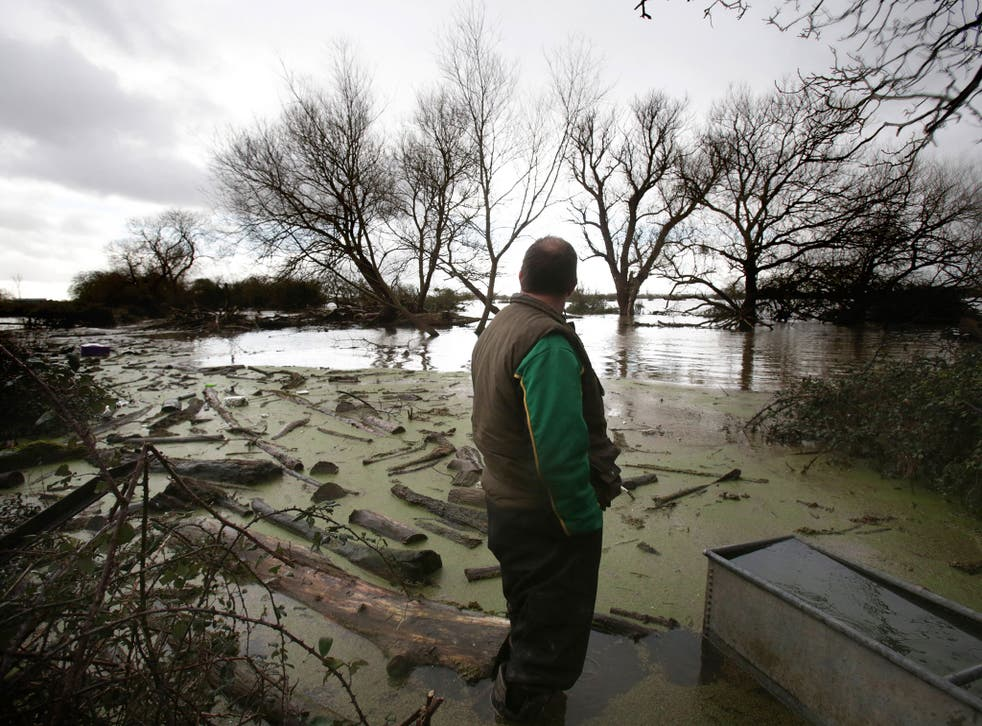 Hell and high water: a Somerset farmer surveys the damage flooding has done to his land and livelihood