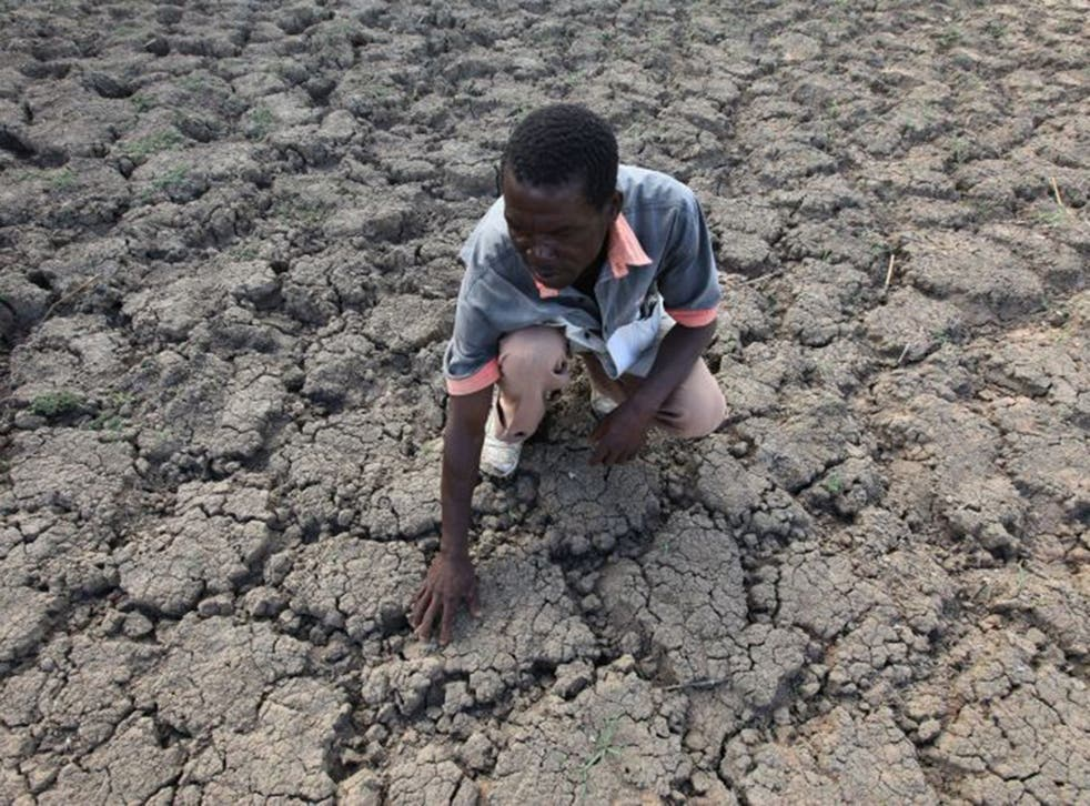 A farmer in Zimbabwe examines a field where crops once grew