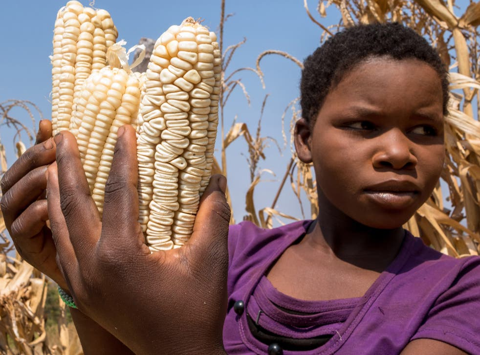A girl poses with her family's remaining maize crop
