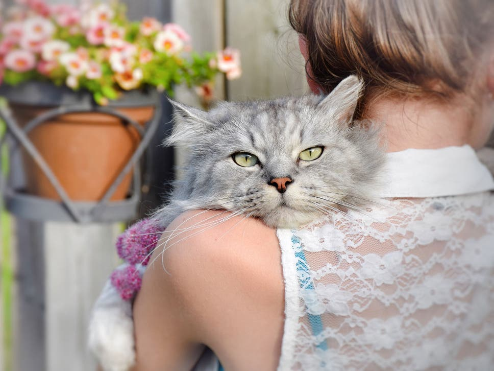 Parasite that breeds in cats 'could affect behaviour when it ... on fireworks cat, sharepoint cat, photoshop cat, curl cat, linux cat, dom cat, iphone cat, cgi cat, e-mail cat, web cat, oracle cat, twitter cat, marketing cat, python cat, spastic cat,