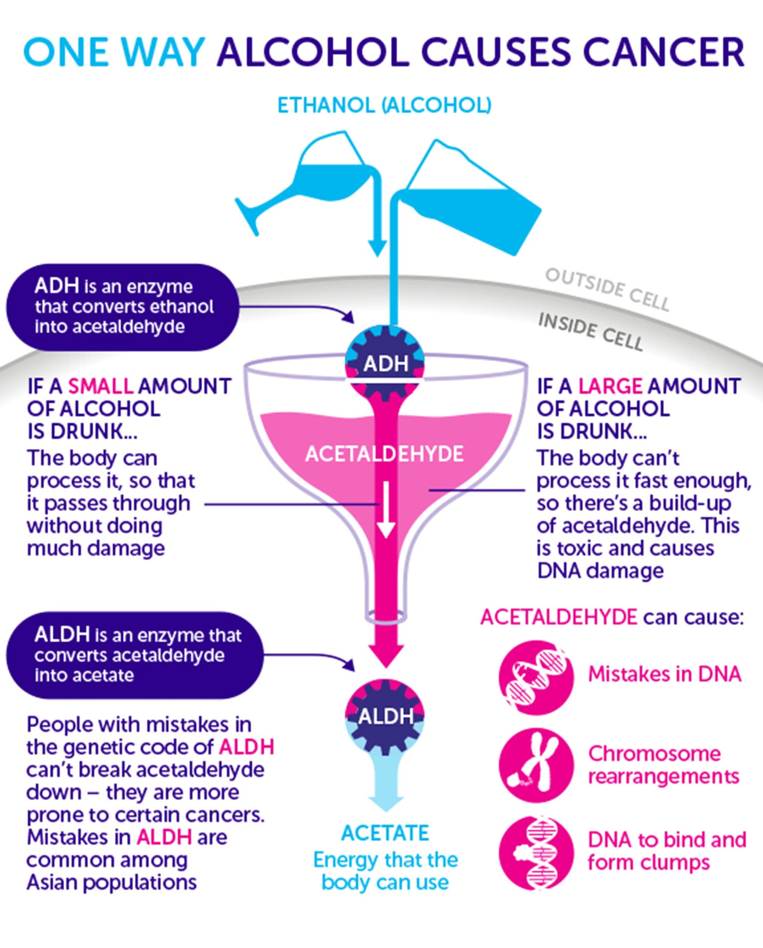 How does alcohol cause cancer? | The Independent