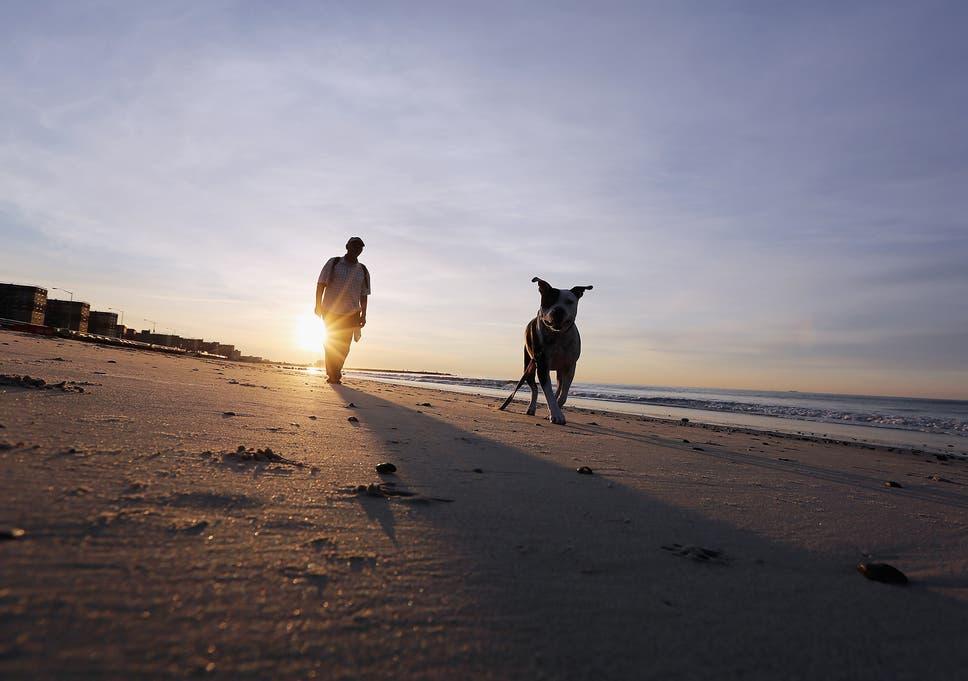 Hamas bans dog walking through the Gaza Strip to 'protect